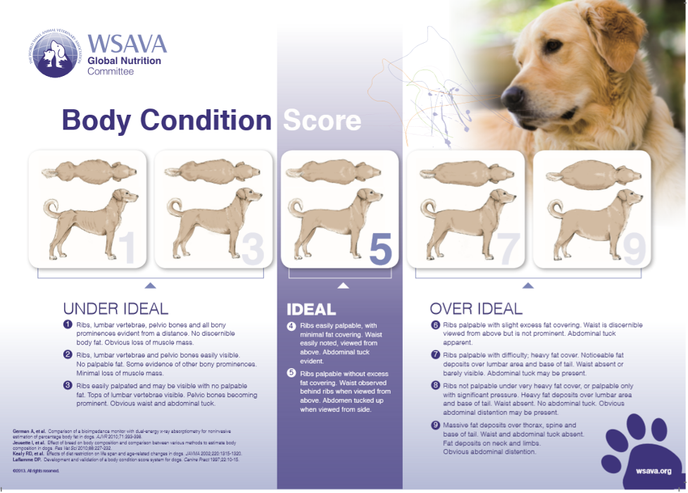 chart for dogs showing ideal body weight